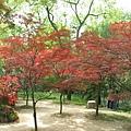 78紅葉林.jp