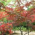 79紅葉林2.jp