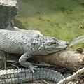 27鱷魚.j