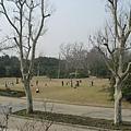 16動物園很多草皮.jpg