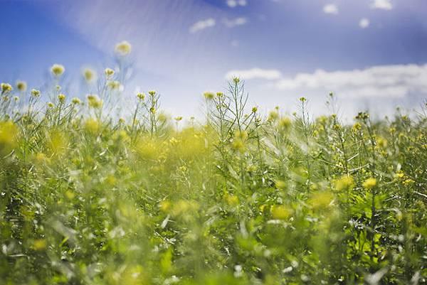 spring-landscape-on-a-sunny-day_23-2147604825.jpg