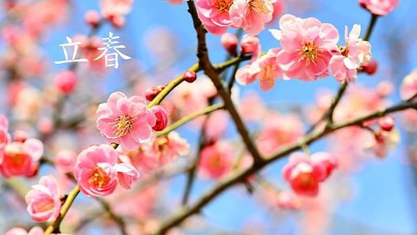 節氣養生 立春