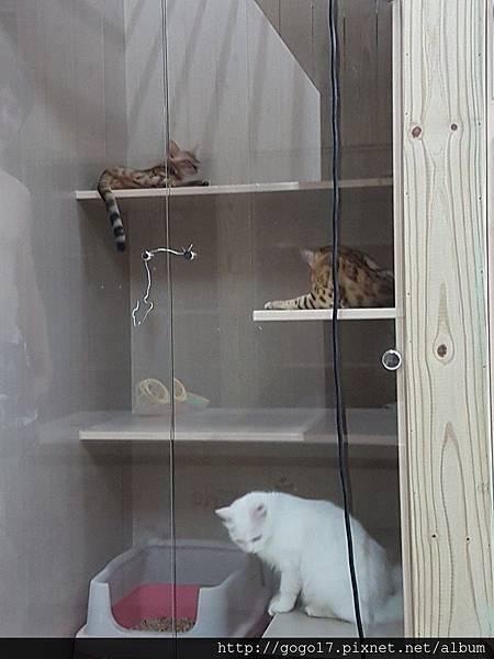 貓咪住宿旅館-大.jpg
