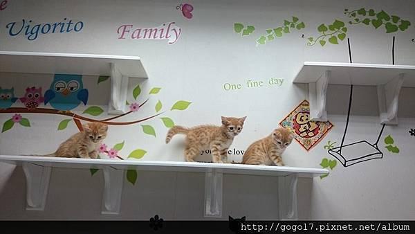 貓咪旅館住宿推薦.jpg