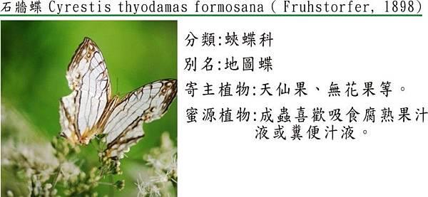 石牆蝶(1)