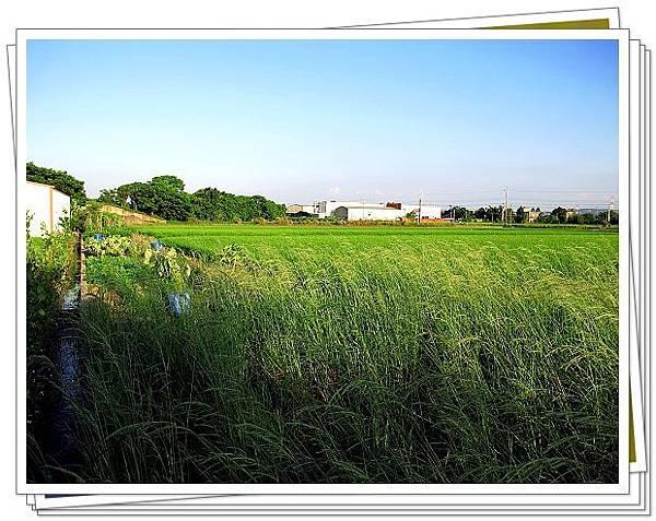 活力健康農場00044.jpg