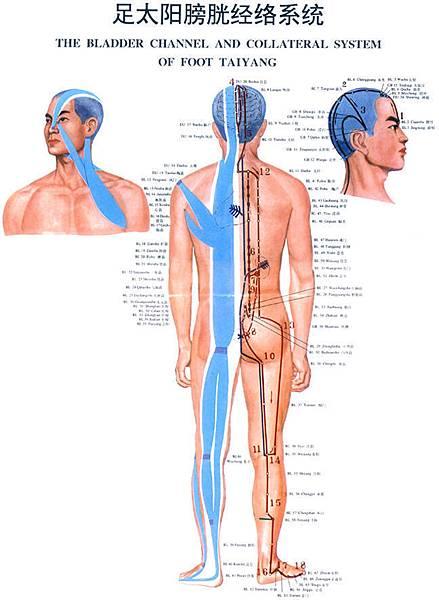 07-足太陽膀胱經