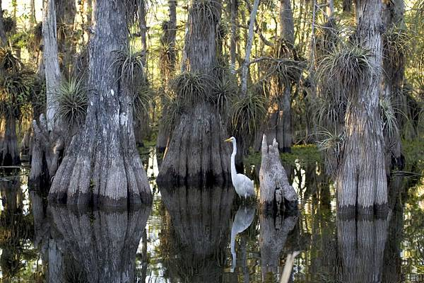 Everglades_3.jpg