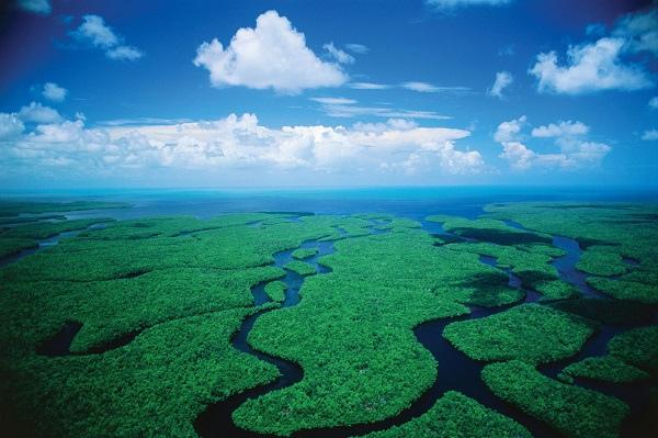 Everglades_2.jpg