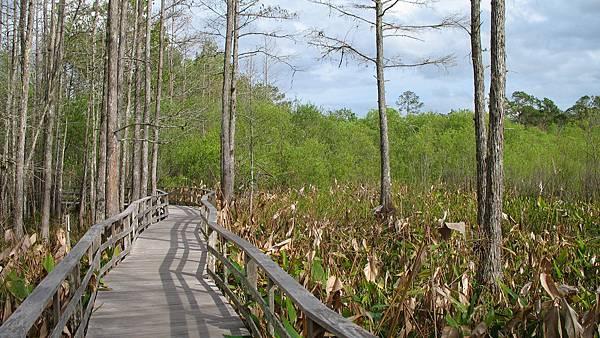 Everglades_1.jpg