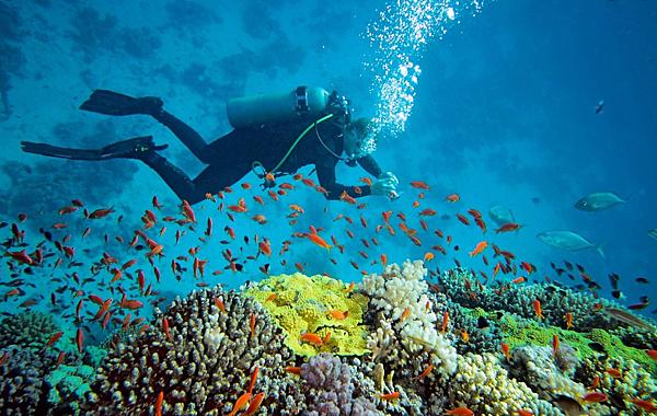 邁阿密沙灘曬太陽- 美國10大熱門遊學城市 gogoenglish