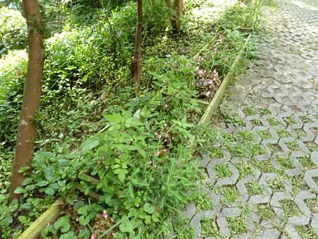 20110825 綠光森林 (28)