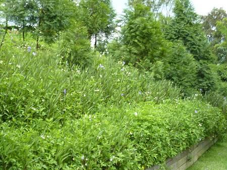 20110825 綠光森林 (32)