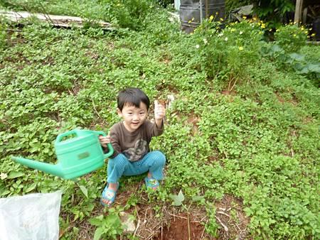20120523種油桐 (2)