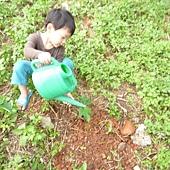 20120523種油桐 (6)