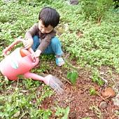 20120523種油桐 (7)