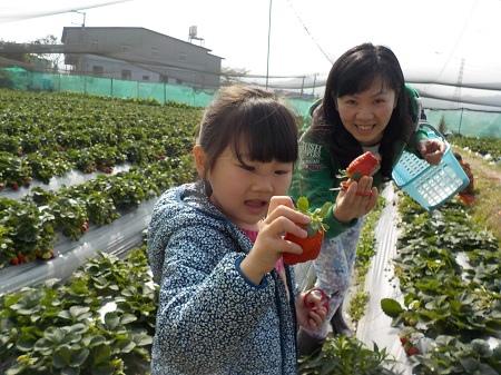 20150217採草莓 (3).JPG