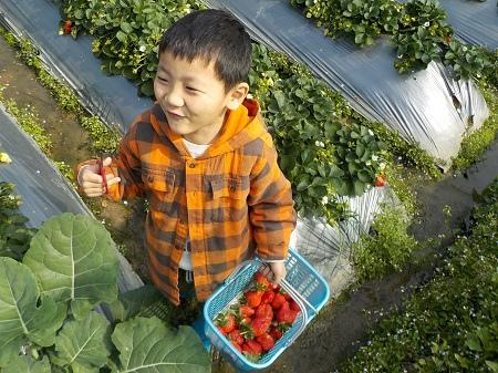 20150217採草莓 (24).JPG
