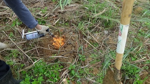 燒火蟻.jpg