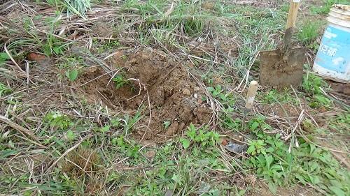 挖後的蟻穴.jpg