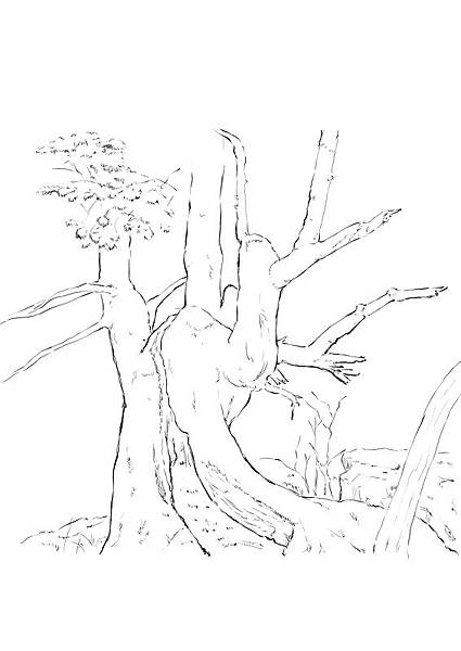 樹木練習1.jpg