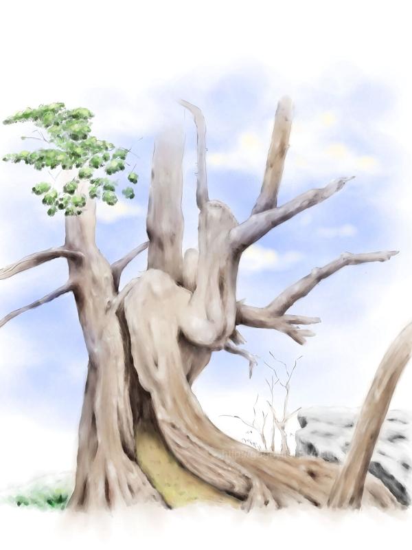 樹木練習1-800.jpg