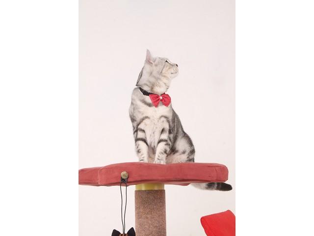 海登寵物用品貓咪與貓居貓跳台035.jpg