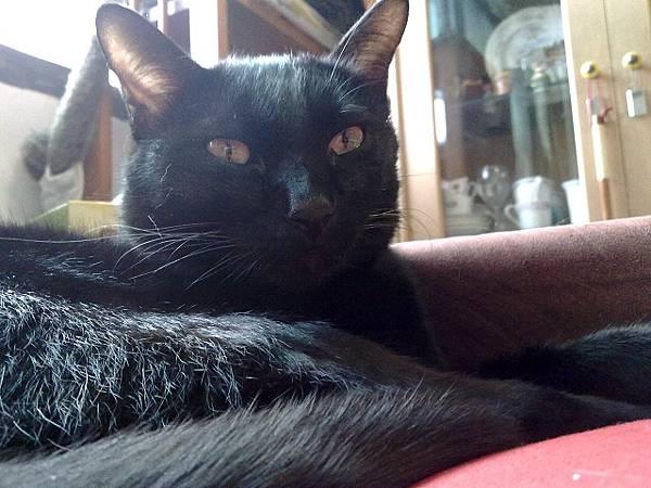 海登寵物用品貓與貓居貓跳台008.jpg