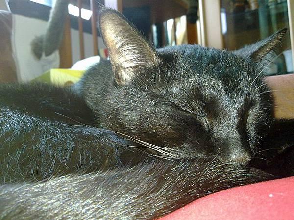 海登寵物用品貓與貓居貓跳台009.jpg