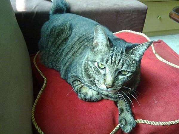 海登寵物用品貓與貓居貓跳台051.jpg