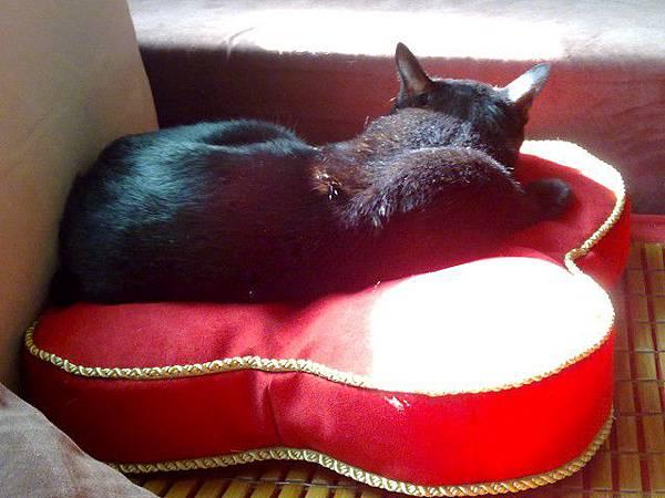 海登寵物用品貓與貓居貓跳台053.jpg