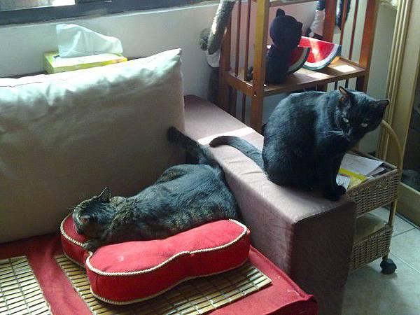 海登寵物用品貓與貓居貓跳台055.jpg