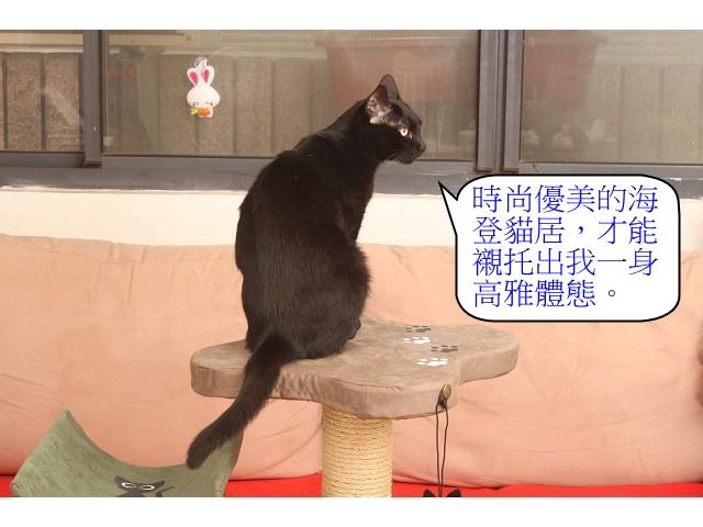 海登寵物用品貓與貓居貓跳台041.jpg