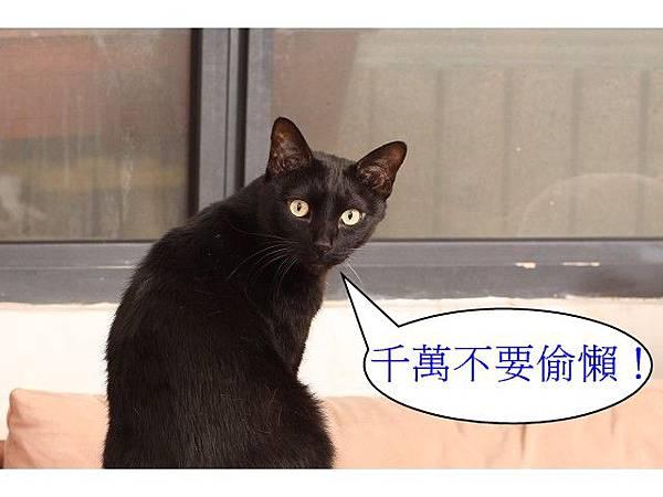 海登寵物用品貓與貓居貓跳台048.jpg