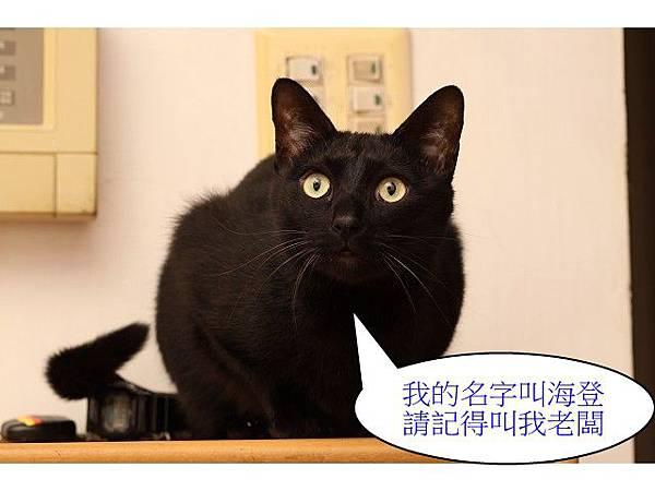 海登寵物用品貓與貓居貓跳台026.jpg