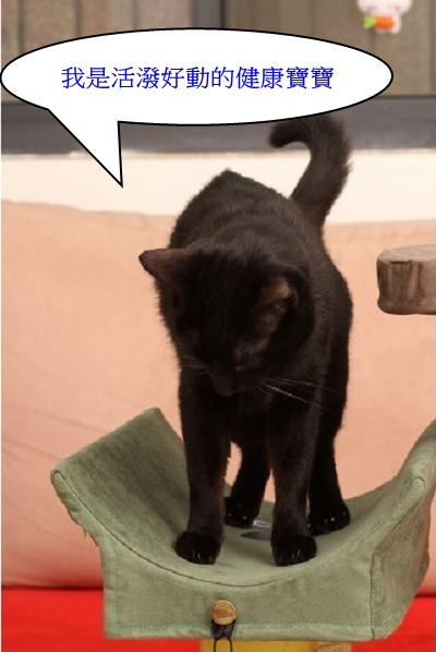 海登寵物用品貓與貓居貓跳台035.jpg