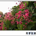 珊瑚藤c10.jpg