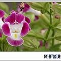 夏菫fd6.jpg