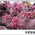 楊桃j3.jpg