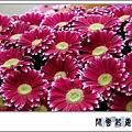 菊花1.jpg