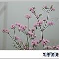 埔里杜鵑f01.jpg
