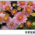 菊pt08.jpg