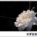 梅花 西洋01.jpg