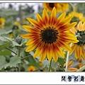 向日葵pty06.jpg