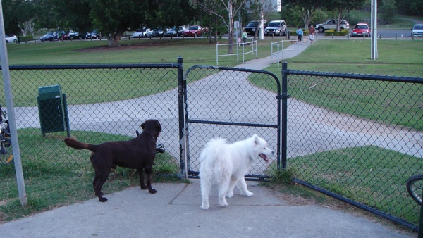 最喜歡去狗公園玩嚕~