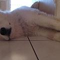 睡到伸懶腰了