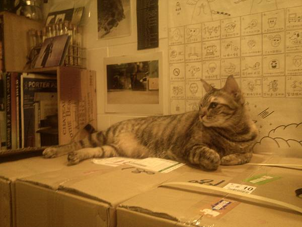 店裡非常慵懶的三貓之一