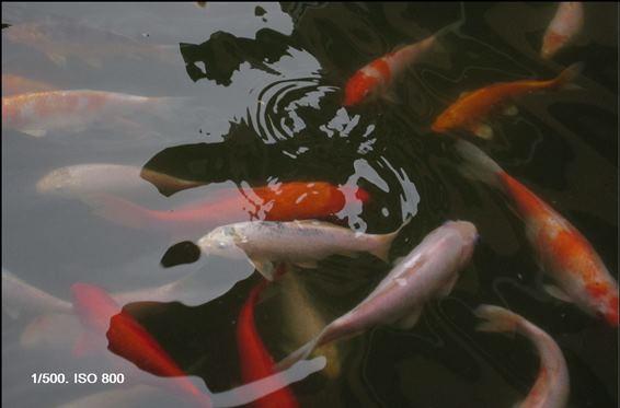 5.9.13.魚池 003-2
