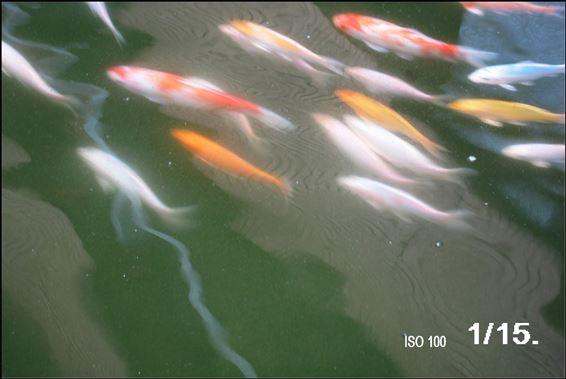 5.9.13.魚池 009 -1