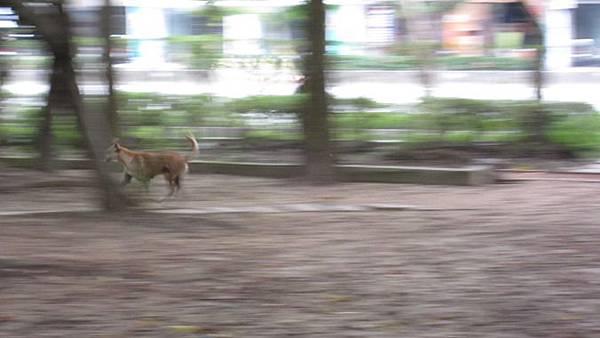 running dog 2